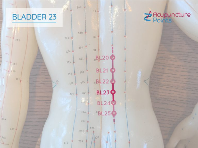 Bladder 23 - Back Shu Points