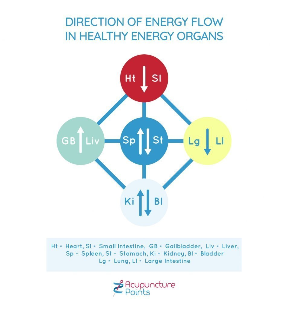 Direction of Energy Flow In Healthy Energy Organs