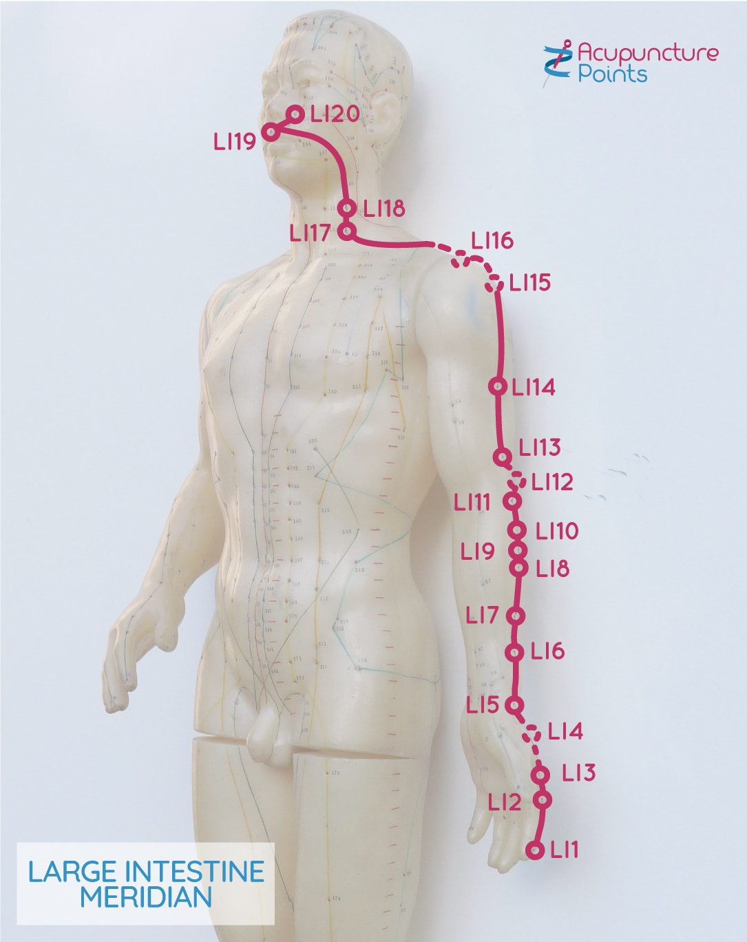 Large Intestine acupuncture channel
