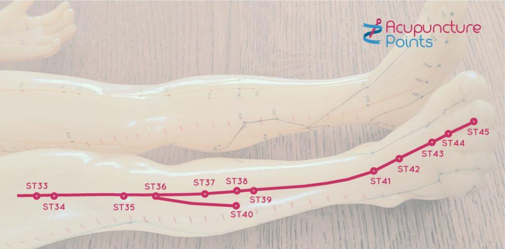 Leg Stomach Channel