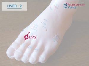 Liver 2 - Xingjian