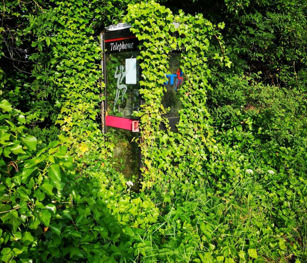 Phone box under ivy. Vibrant green-phlegm-colour suggests something growing or developing, overcoming the body's defence.