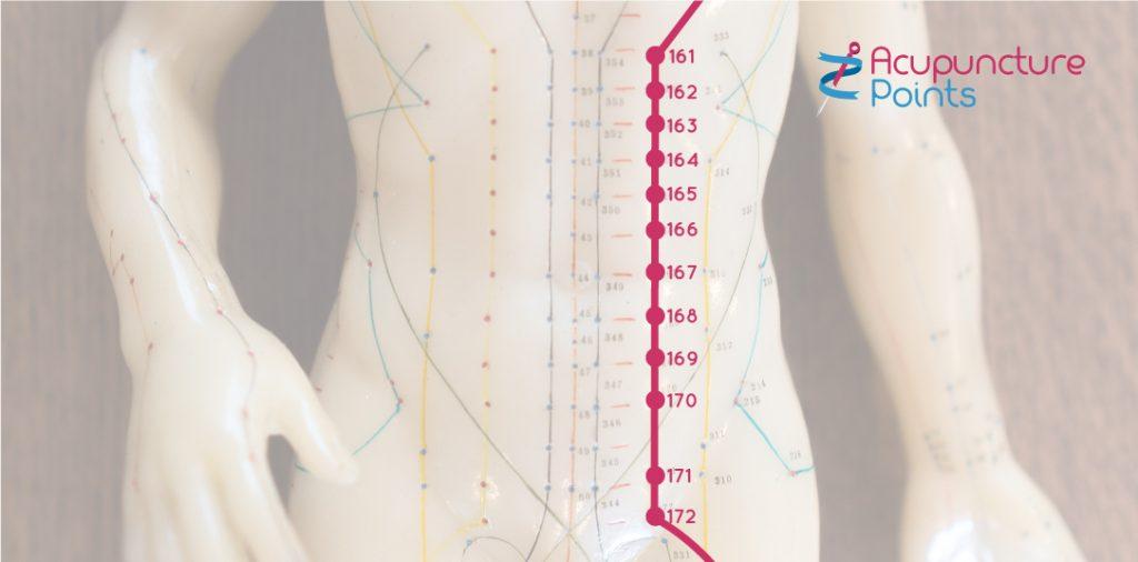 Stomach points on the Abdomen