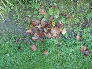 autumn-leaves1