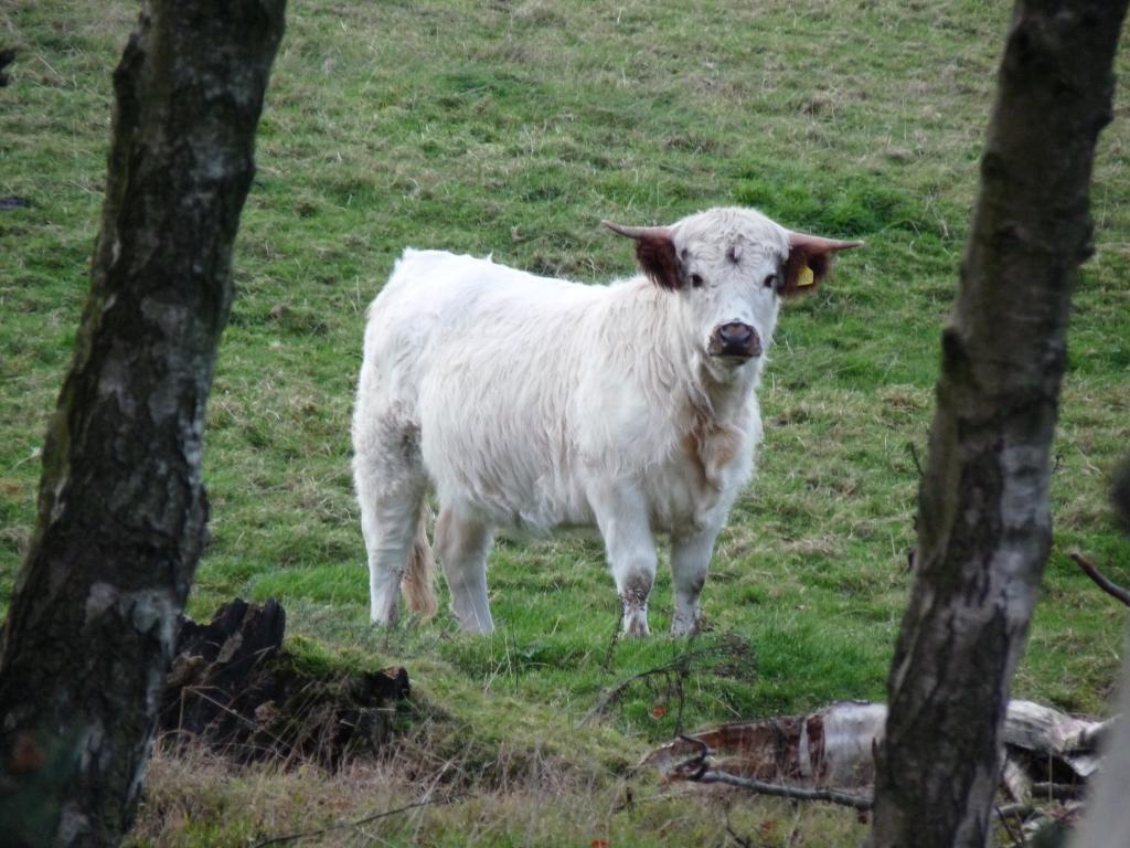 Animal dander often causes hayfever