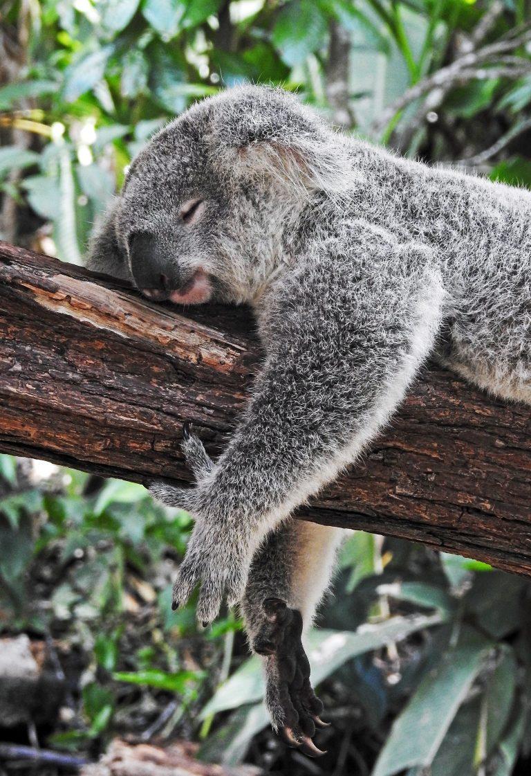 Difficulty falling asleep