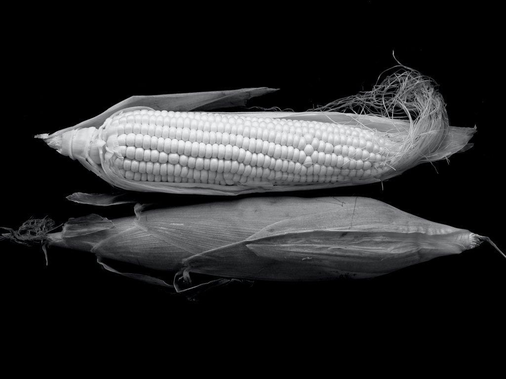 Corn silk tea to clear damp