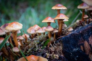 Fungi often make good Damp Foods: foods that help Damp conditions